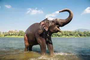 natuurreis India